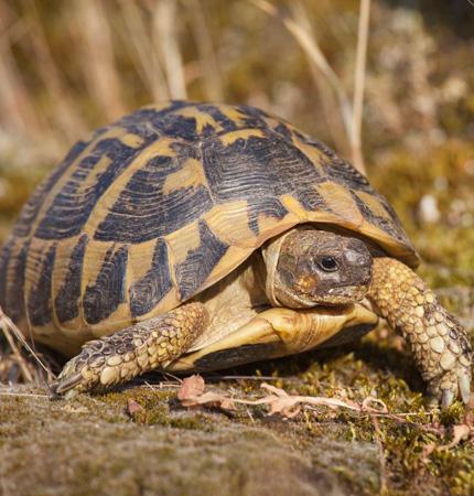 țestoasă anturaj pierdere în greutate